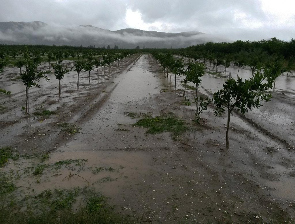 Glog - kiša
