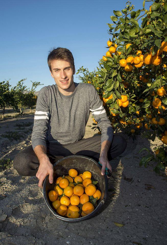 Mandarine, Vlaho Prović